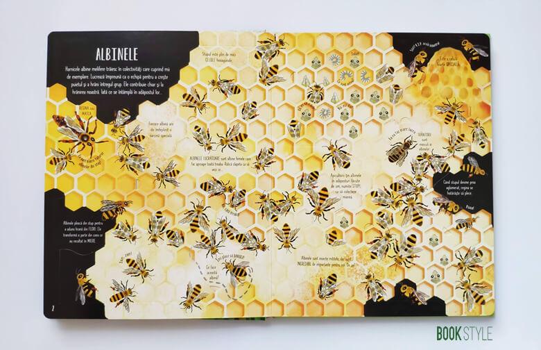 Carte cu clapete: Fluturi și alte insecte, de Emily Bone – Colecția Usborne   Univers Enciclopedic